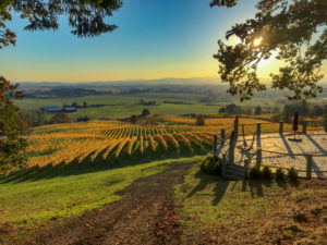 Prestige Wine Tours